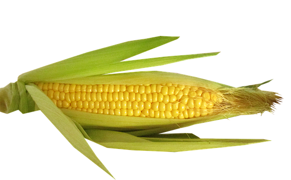 Common Corn Products