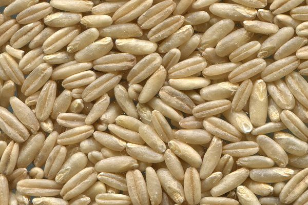 All About Oats